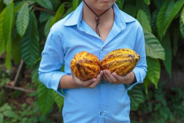Verse cacaovruchten in handen van boeren