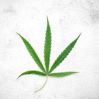 Verse cannabisbladeren opgezet op wit beton.