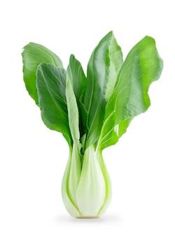 Verse chinese bok choy groente die op wit wordt geïsoleerd