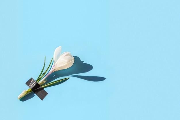 Verse crocus bloemen onder hechtpleister op licht.