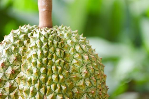 Verse durian tropische fruittuin op groene aard