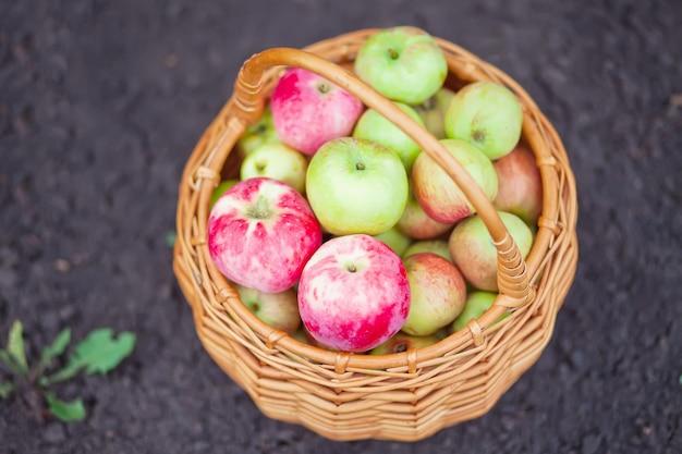 Verse en kleurrijke appels in de mand