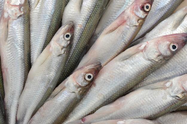 Verse europese smeltvissen