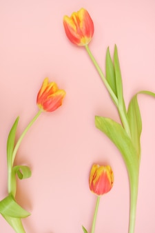 Verse geel-rode tulpen op een roze oppervlak.