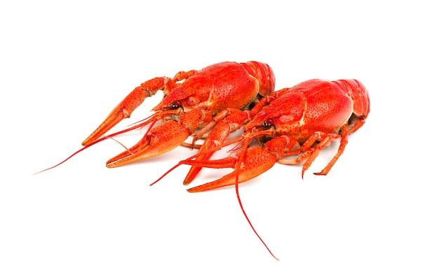 Verse gekookte rode rivierkreeften die op wit worden geïsoleerd. bovenaanzicht