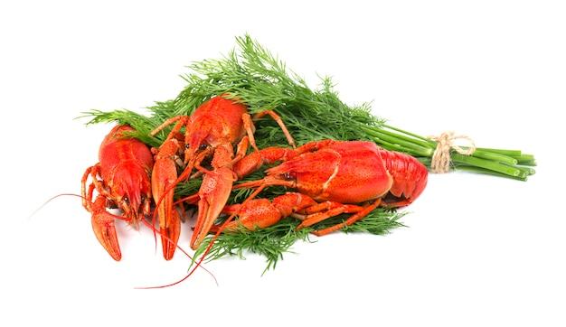 Verse gekookte rode rivierkreeften die op wit worden geïsoleerd