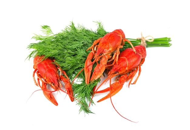 Verse gekookte rode rivierkreeften met dille die op wit wordt geïsoleerd