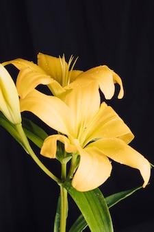 Verse gele bloemen en groen gebladerte in dauw