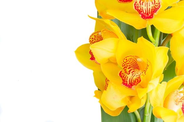Verse gele orchidee bloemen en groene bladeren grens geïsoleerd op een witte background