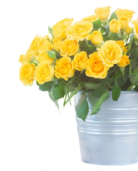 Verse gele rozen met groene bladeren in metalen pot close-up geïsoleerd op wit