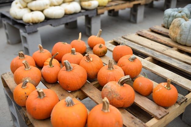 Verse gezonde bio oranje pompoenen op boeren landbouwmarkt