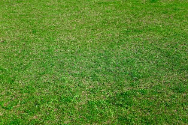 Verse grasbedekking op de achtergrond van het voetbalveld