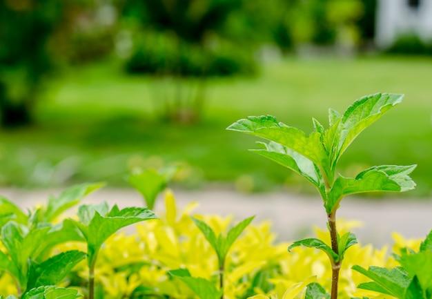 Verse groene achtergrond op de tuin