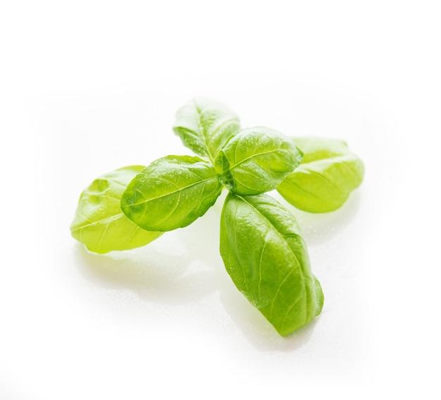 Verse groene basilicum geïsoleerd op wit