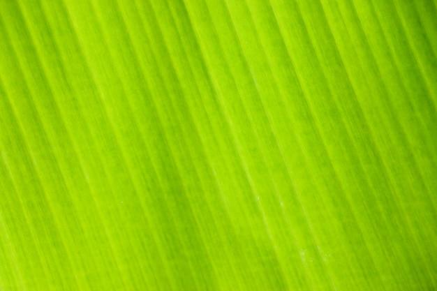 Verse groene blad textuur achtergrond van bananenblad