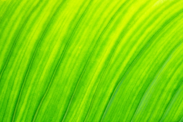 Verse groene blad textuur natuurlijke abstracte achtergrond