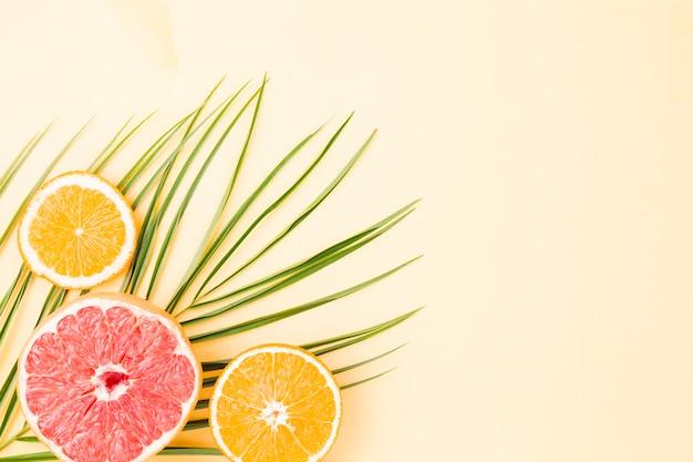 Verse groene bladeren en citruses