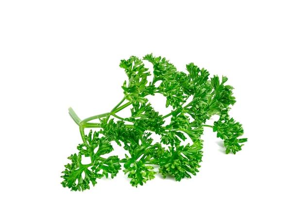Verse groene bladeren van pasley die op witte muur worden geïsoleerd