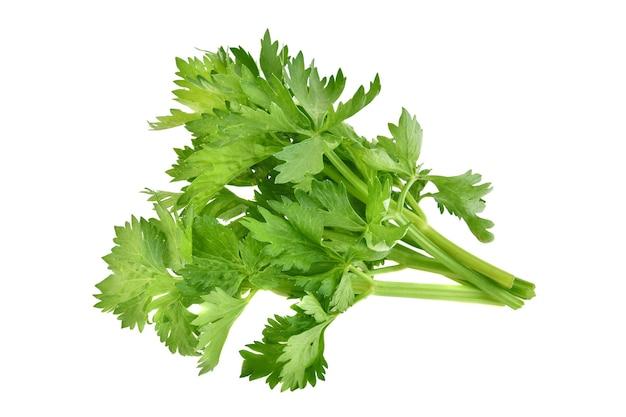 Verse groene bladselderij die op witte achtergrond wordt geïsoleerd