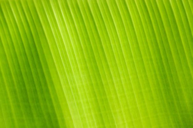 Verse groene bladtextuur van banaan