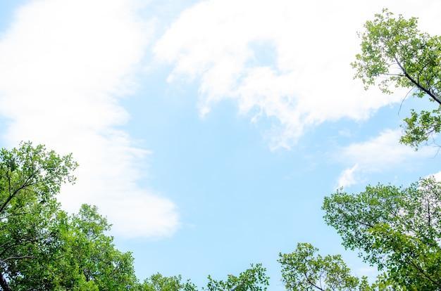 Verse groene boom met wolken en blauwe hemelachtergrond.