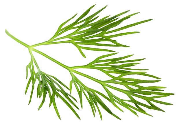 Verse groene dille geïsoleerd op een witte achtergrond.