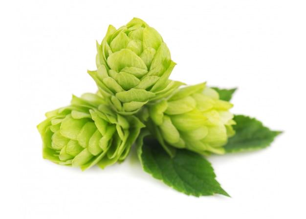 Verse groene geïsoleerde hoptak. macro
