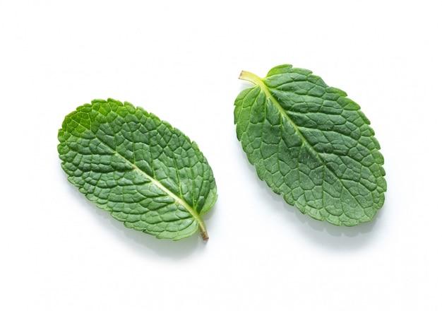 Verse groene geïsoleerde muntbladeren