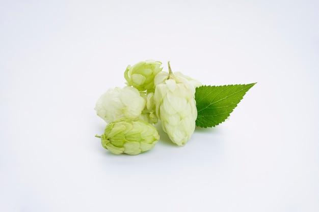 Verse groene hop
