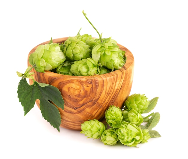 Verse groene hoptak in olijfkom, geïsoleerd op een witte achtergrond. hopbellen met blad. biologische hopbloemen. detailopname.