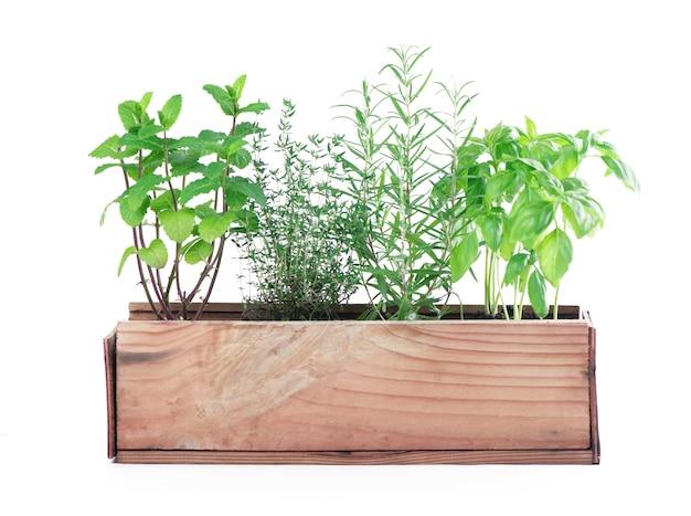 Verse groene keukenkruiden die over witte lijst worden geïsoleerd.