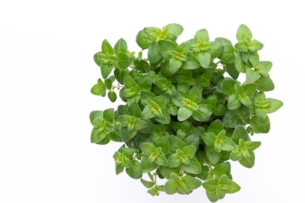Verse groene kruiden geïsoleerd op een witte achtergrond