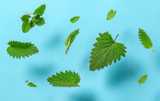 Verse groene muntblaadjes die op blauwe achtergrond vliegen