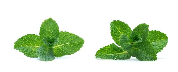 Verse groene muntblaadjes geïsoleerd op een witte achtergrond. bovenaanzicht.