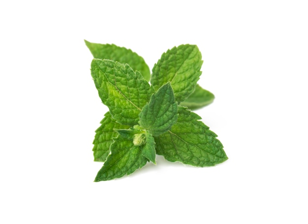 Verse groene muntblaadjes geïsoleerd op wit