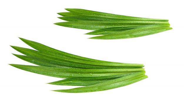 Verse groene pandan bladeren met geïsoleerde waterdruppeltjes