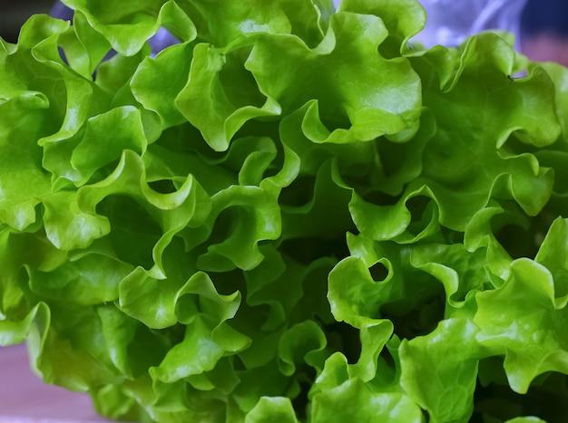 Verse groene sla salade, achtergrond. salades groente. biologisch voedsel voor gezondheidsconcept. detailopname