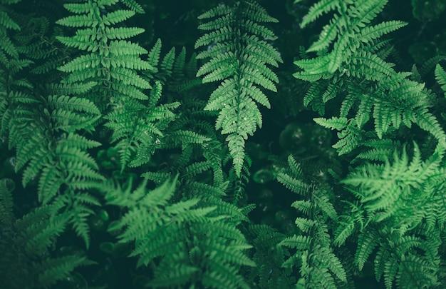 Verse groene varen leves met waterdruppels