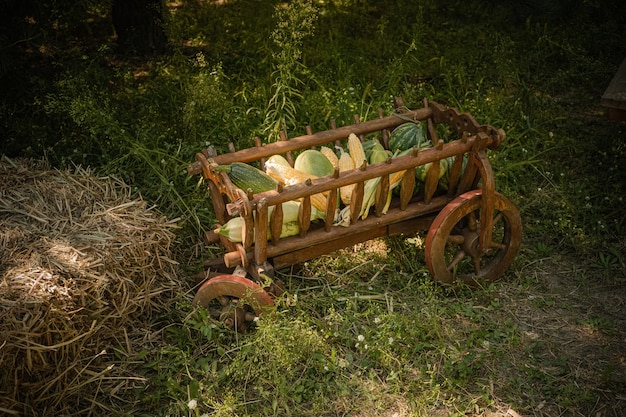 Verse groenten, herfst oogst in oude houten kar op groen gras naast het hooi. zijaanzicht.