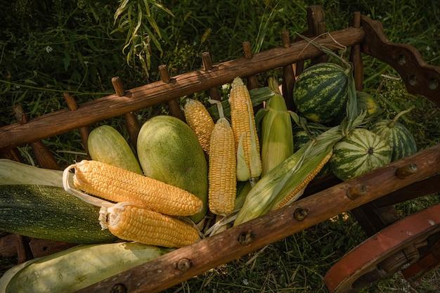 Verse groenten, maïs, watermeloen, plantaardig merg in houten karretje op groene aard