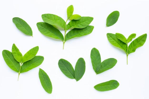 Verse guavebladeren op wit