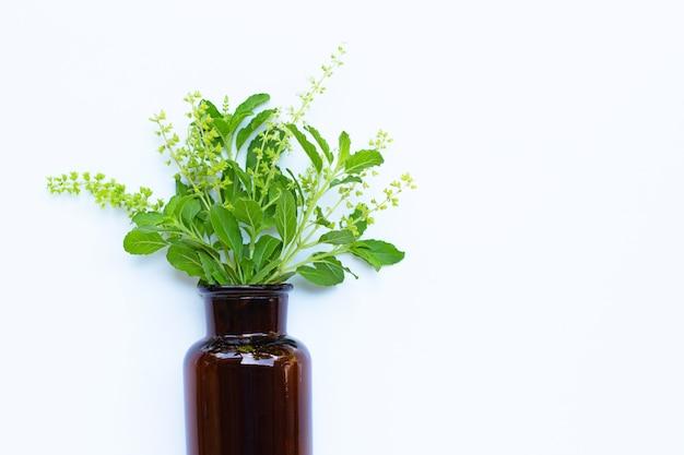 Verse heilige basilicumbladeren en bloem met etherische oliefles op wit.