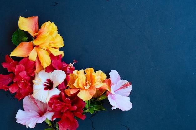 Verse hibiscus bloemen hopen op zwarte achtergrond met kopie ruimte