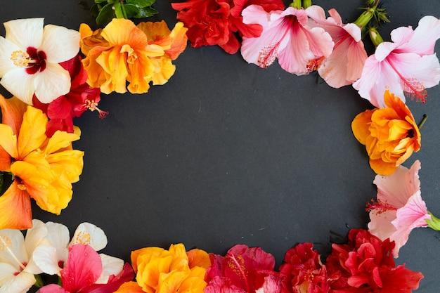Verse hibiscus bloemen op zwarte achtergrond, frame met kopie ruimte