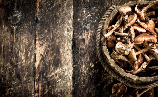 Verse honingsplaatzwammen in een houten emmer.