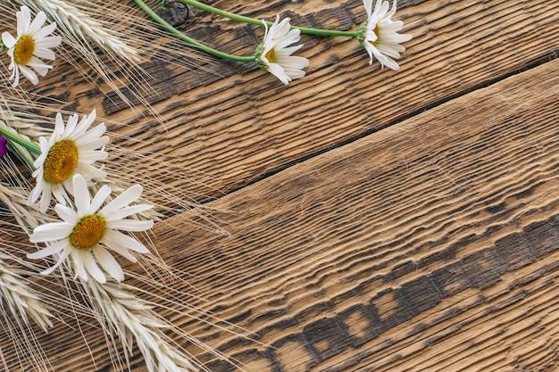 Verse kamille bloemen en droge aartjes van tarwe op houten planken. bovenaanzicht.