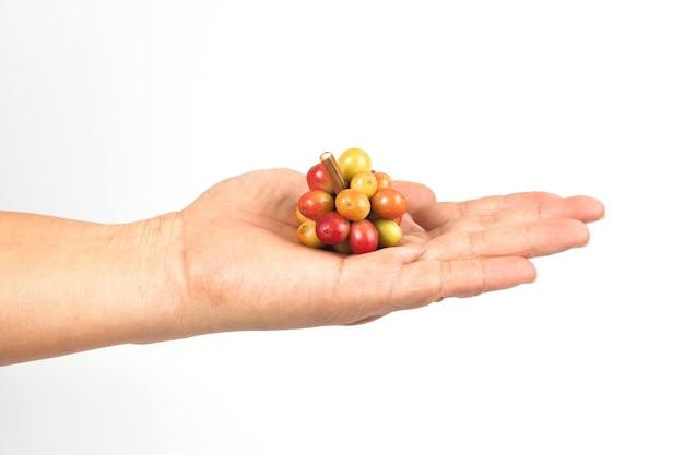 Verse koffiebonen ter beschikking op witte achtergrond, conceptenvoedsel en drank.