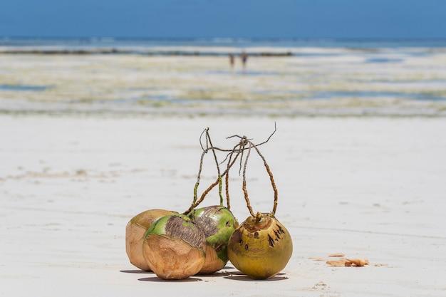 Verse kokosnoten op het zandstrand, zanzibar, tanzania, close-up