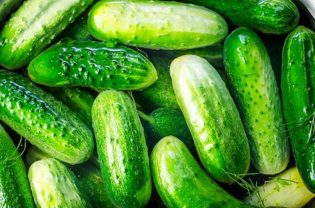 Verse komkommers in blikjes