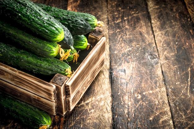 Verse komkommers in een oude doos. op een houten achtergrond.